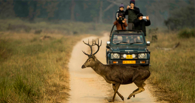 essay on kanha national park
