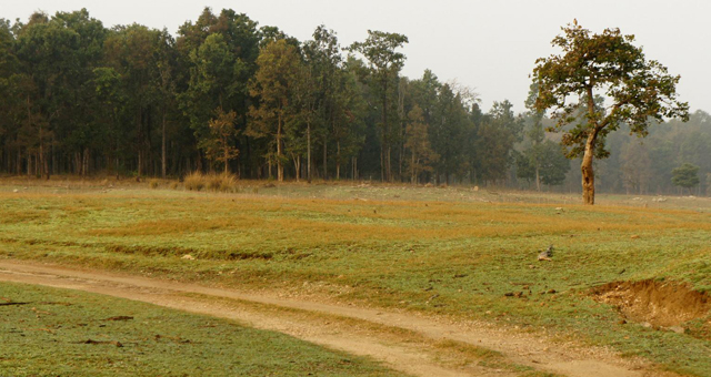 Summer in Kanha National Park