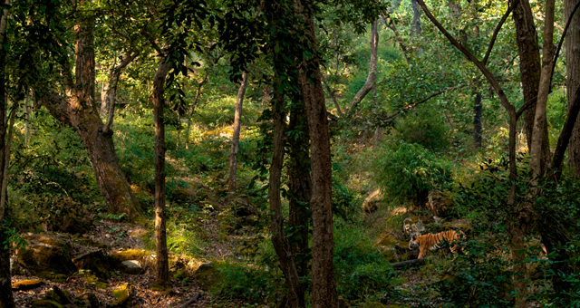 Winter in Kanha National Park