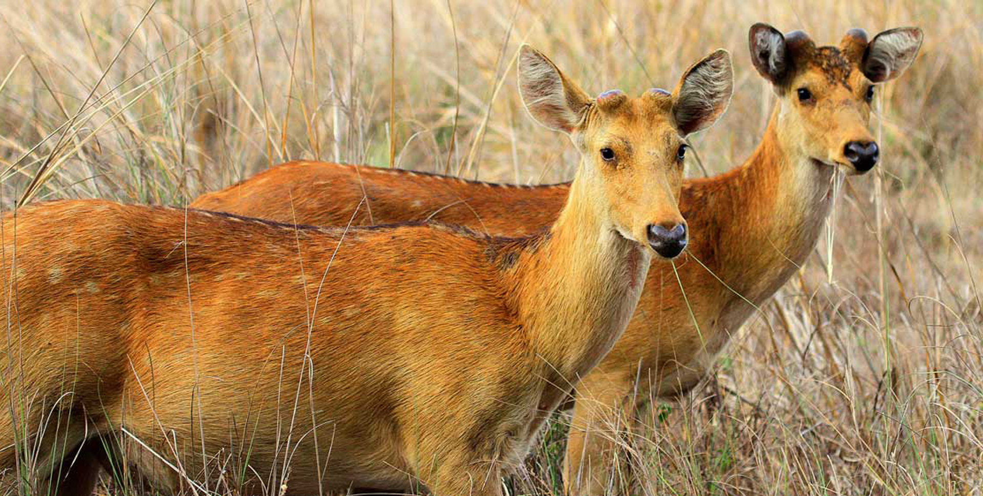 Animals in Kanha National Park