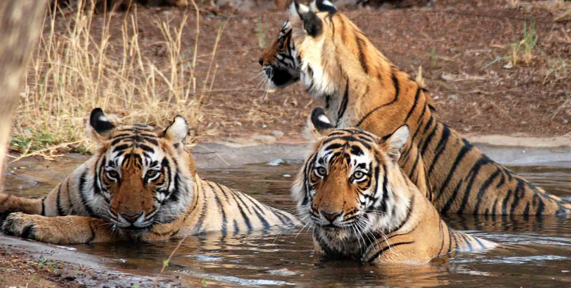Beautiful Animals in Kanha National Park